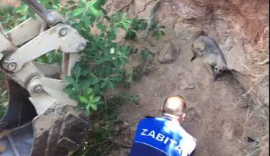 4 metrelik çukura düşen köpeği zabıta kurtardı