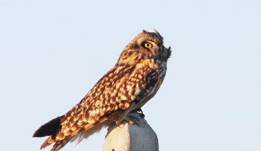 Kuş türü sayısı 233'e yükseldi