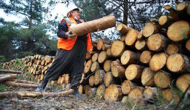 """Ağaç kesme motoruyla ormanların bakımını yapan """"Nilgün abla"""" azmiyle örnek oluyor"""