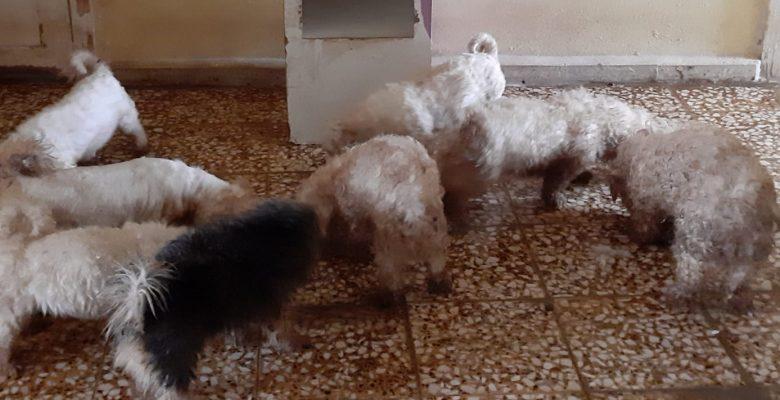 Yurt dışından kaçak sokulup, üretilen köpeklere Jandarma el koydu