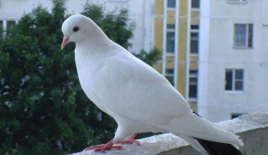 Güvercinlerine bakmak için çıktığı çatıdan düşüp öldü