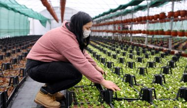 Meslek lisesinin seralarında yetiştirilen süs bitkileri markalaşma yolunda