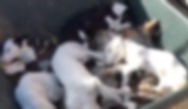 Cumhuriyet Başsavcılığı, ölü bulunan köpek yavruları için soruşturma başlattı
