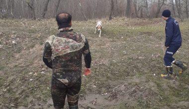 Çayda mahsur kalan köpek itfaiye ekiplerince kurtarıldı