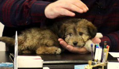 Başkan Kesimoğlu'nun makamına aldığı sokak köpeğinin videosu beğeni topladı
