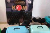 Yurt dışından kaçak sokulan 13 cins yavru köpek yakalandı