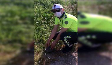 Kaplumbağaya polis yardım etti