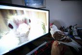 Ölmek üzereyken kurtarılan güvercin kanat çırpmaya başladı