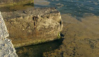 Plankton çoğalması sonucu sahil kahverengiye büründü