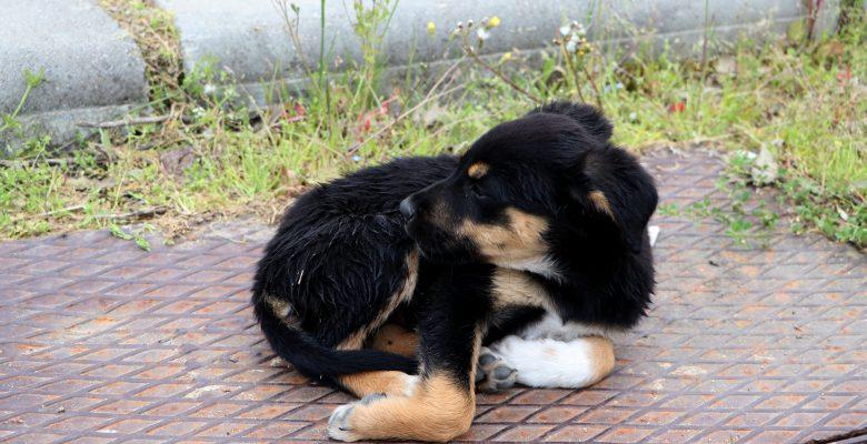 Tunca Nehri'ne atılan yavru köpeği güvenlik görevlisi kurtardı