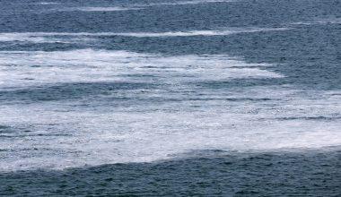 Deniz salyası balıkçılığı tehdit ediyor
