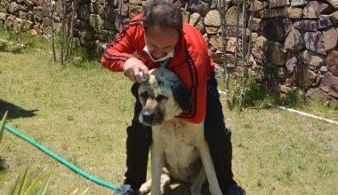 İşkence yapılan iki köpekten biri telef oldu!