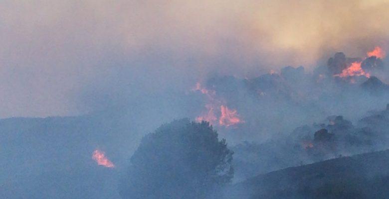 Avşa Adası'ndaki makilik alanda yangın çıktı