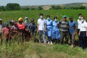 Hasat yapan işçilere Kovid-19 aşıları tarlada yapıldı
