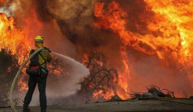 Batı Trakya'da orman yangını!