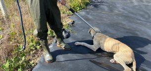 Gölete düşen köpeği itfaiye ekipleri kurtardı