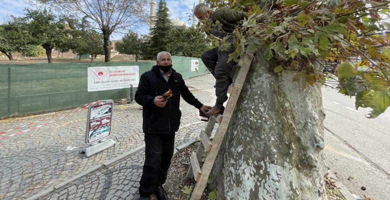 Edirne'de 160 yıllık ağaçtan toplanan bal vatandaşlara ikram edildi